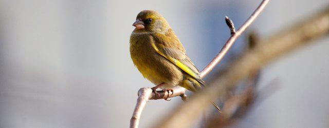 Ptasie interwencje – praktyczny poradnik