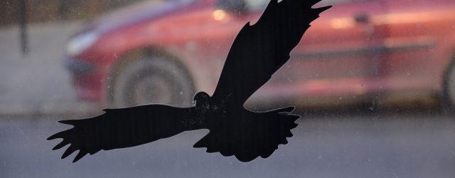 Ekrany przy ulicy Powstańców Warszawy w Rzeszowie od kilku lat zabijają ptaki