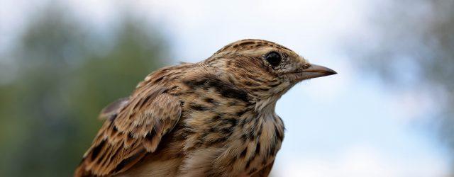 Kolejny raz pytamy u źródła. Minister Kowalczyk i Minister Kwieciński zapytani o ptaki i szyby.