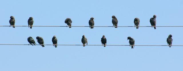 Jesteś świadkiem kolizji ptaka z szybą? Dodaj swoją obserwację do rejestru Szklanych Pułapek